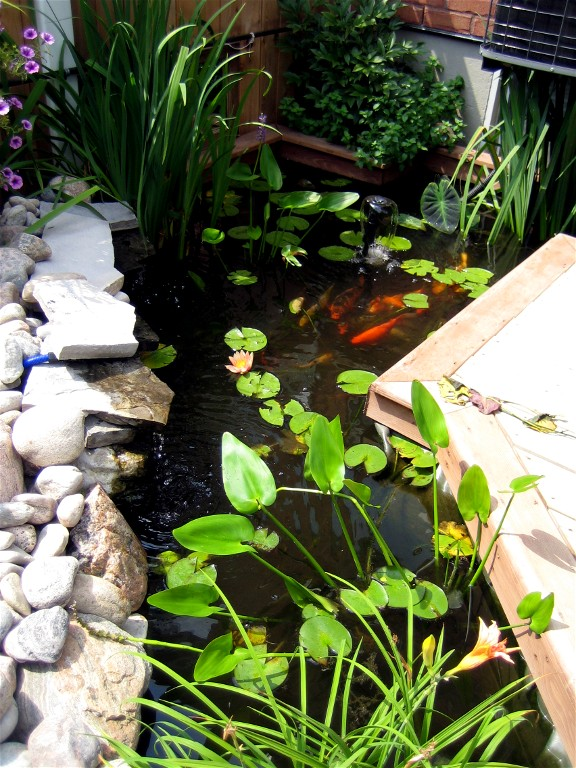 A beautiful Fish pond