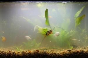 Cloudy Fish Tank on Advice    Aquarium Fish Paradise     Adelaide S Best Value Aquarium S