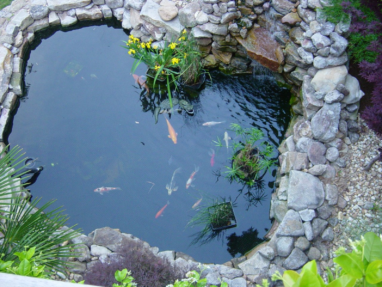 adelaide pond cleaning service aquarium fish paradise adelaide sa
