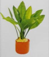 Echinodorus Bleheri