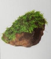 Fontinalis Rock
