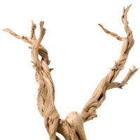 Ghostwood - Branchy