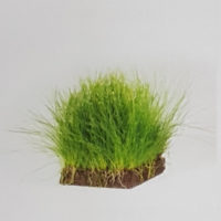 Lava Hairgrass Block