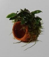 Terracotta Urn Small
