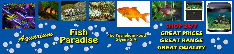 Aquarium Fish Paradise – Adelaide SA