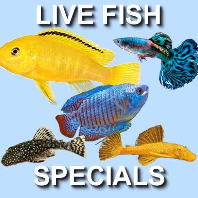 Live Fish Specials